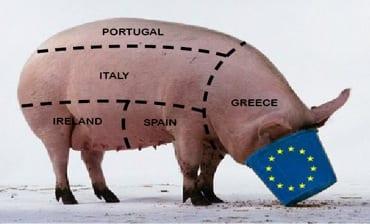 Pig-081313