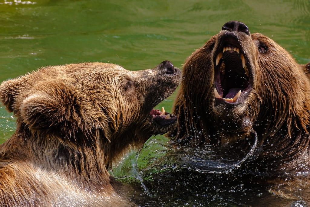 [two bears]
