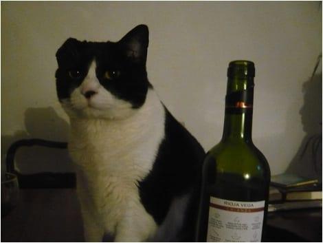 [Cat with Wine]